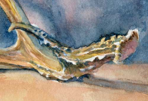 Antler (close up) Watercolor on Arches #300 hot press