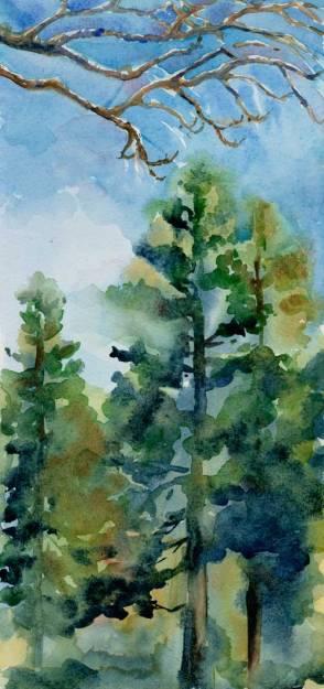 Jan9_Trees