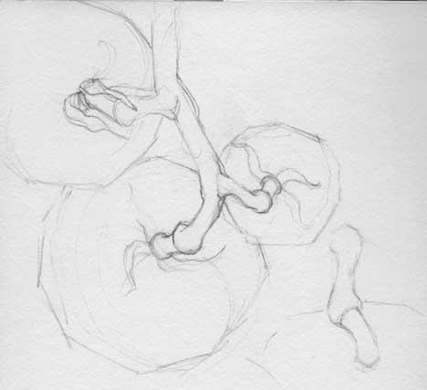Field sketch of Vogliotti tomato stems Graphite in Stillman & Birn Delta Series sketchbook