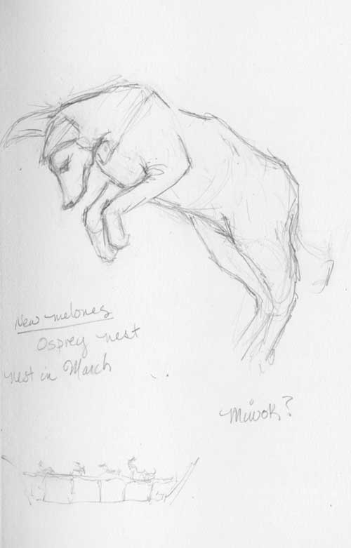 Stuffed coyote in pouncing pose at New Melones Lake Visitor Center & Museum Stilman& Birn Zeta Series Sketchbook
