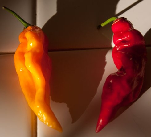 Red and yellow chiles