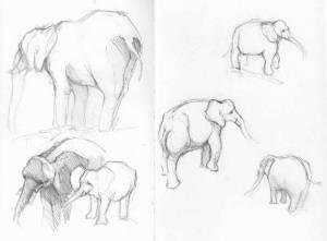 Elephant sketches