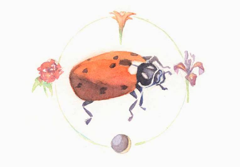 "Lacybug, Lily, Iris Ladybug in the Circle of the Virgin 5"" x 7"" watercolor on Arches #300 hot press $50"
